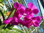 orchid_farm1