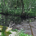Banc de pierre couvert de mousse en sous-bois (Herboretum 45)