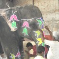 Jaipur, preparation d'un elephant pour un marriage