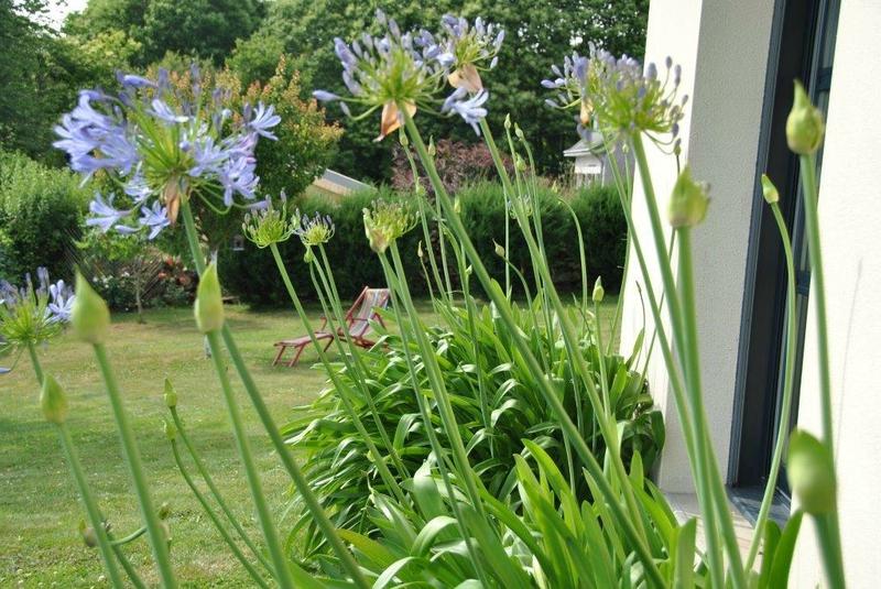 le jardin de la Fée Morgane (6)