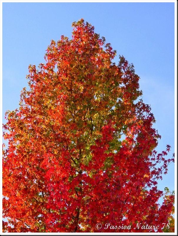 La forêt aux couleurs d'automne (4)