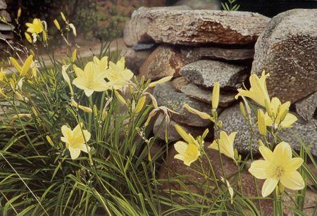Steve Mills fleurs
