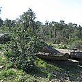dolmens des Terriers (4)