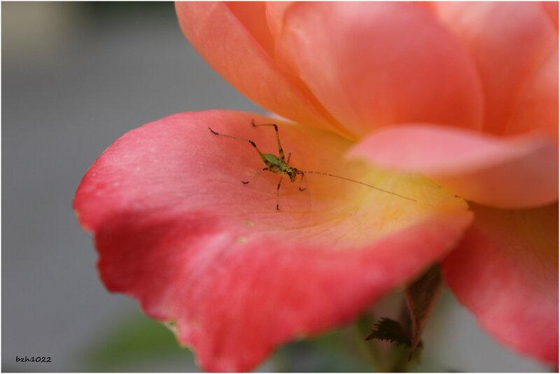 fleur et petite bete 2