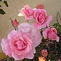 Pour le mois rose...