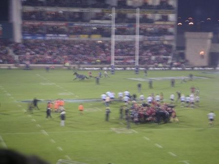 cheval_match_rugby
