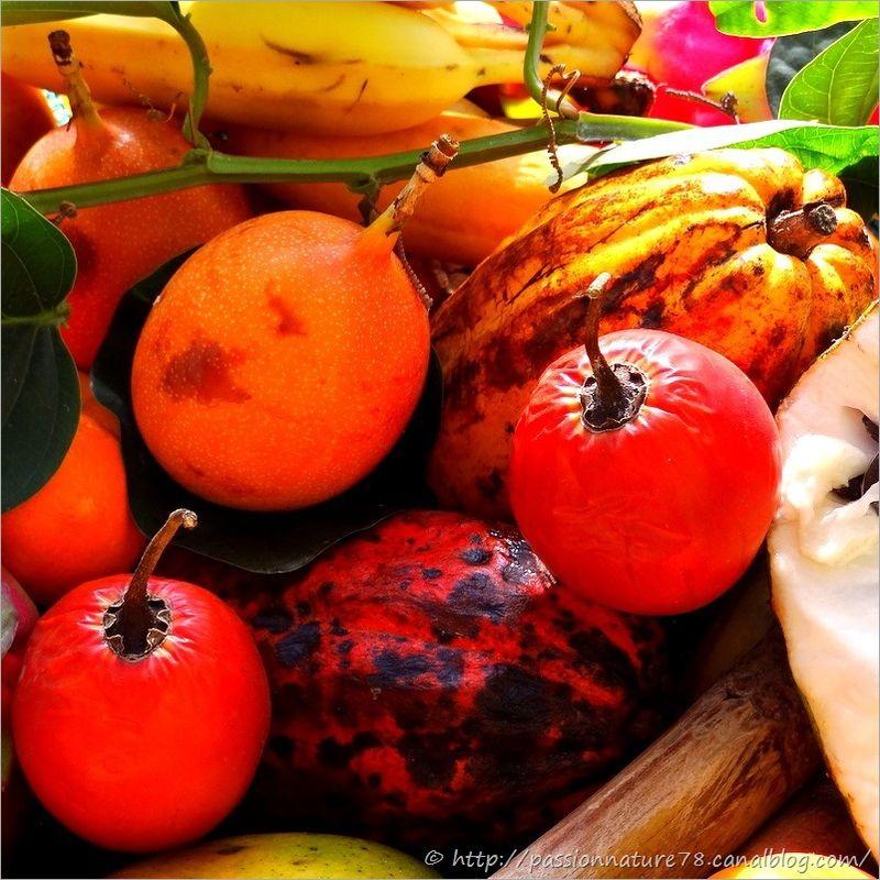 Fruits exotiques (13)