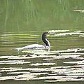 Visite surprise sur l'étang...