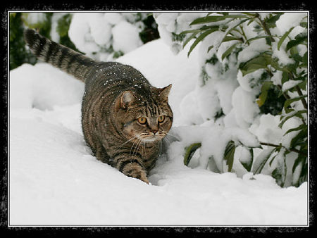 chat_neige_4