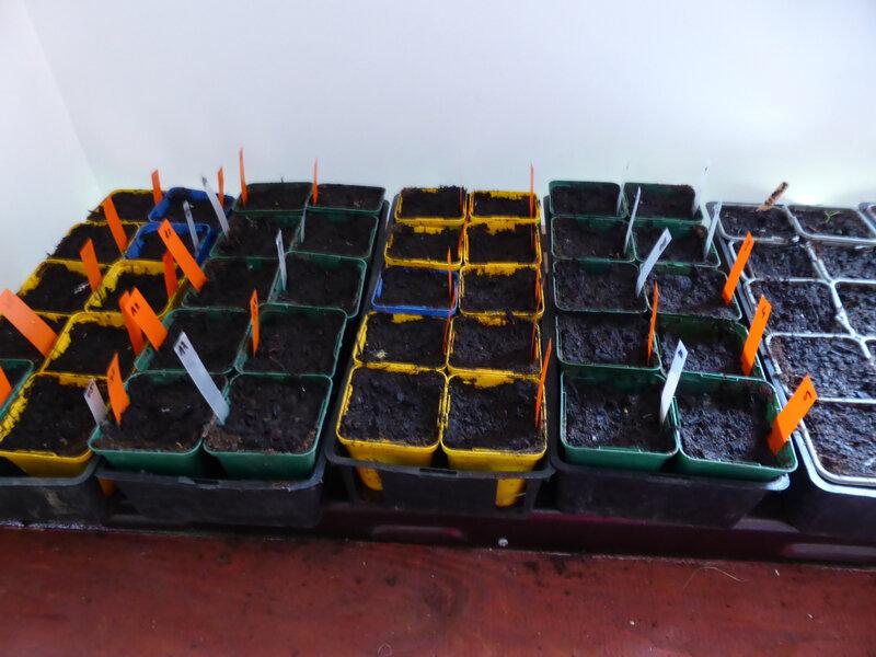 3-tomates (1)