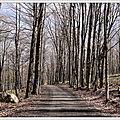 Promenade en forêt et souvenir du passé