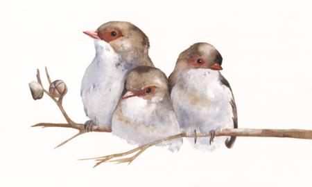 branche oiseaux