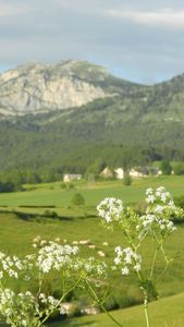 1350- Payonniere - Rando Vercors - 14062013 (15)