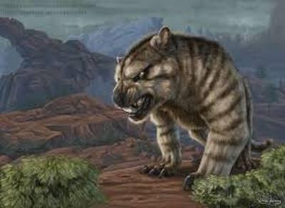 Noah-anim, tigre antédil