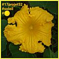 28 projet52 2017 - Soleil