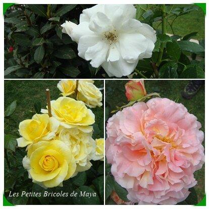 Roses Foire aux plants