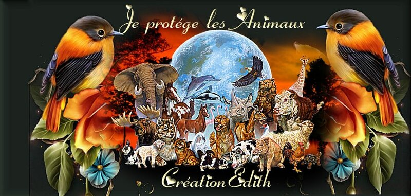 creationbanniére edith1