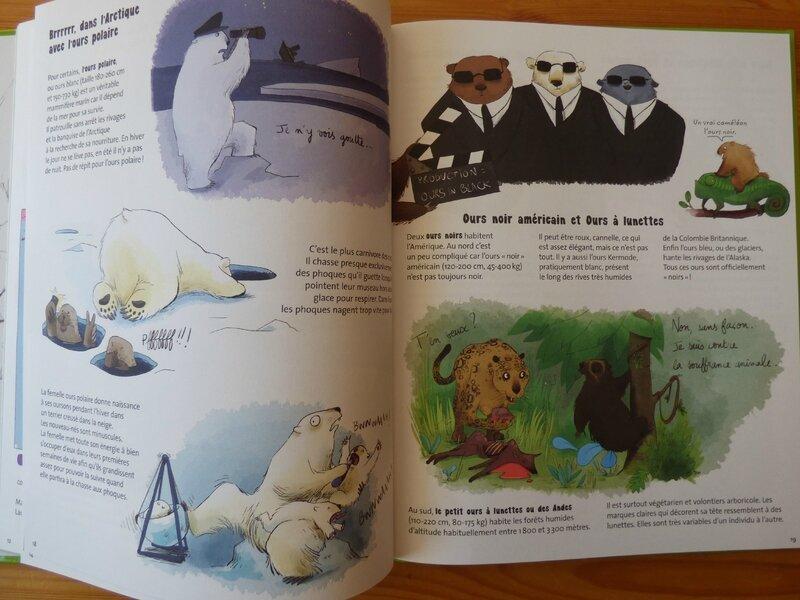 Tout sur l'ours (1)