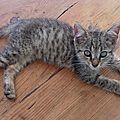 Didl et Luno - chatons déchetterie 3 Rivières 1