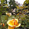 Parc de Belleville, Paris, été 2011 (16)