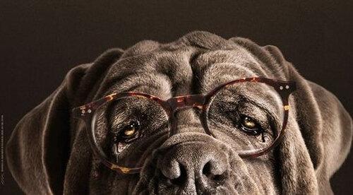 CANILOVE site de rencontres pour chiens. Inscription gratuite *   Polytrans