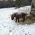 Mon avalon sous la neige...