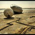 Au bord de l'eau (1)