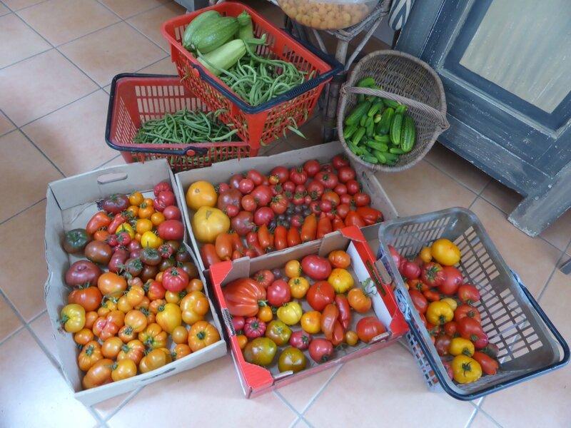 26-récolte du jour (2)