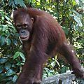 Sabah/bornéo - malaisie - du 15 au 22 avril 2014