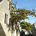 Le chêne de l'église de cheillé