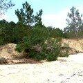 erosion de la dune plage de gatseau !!!!!!