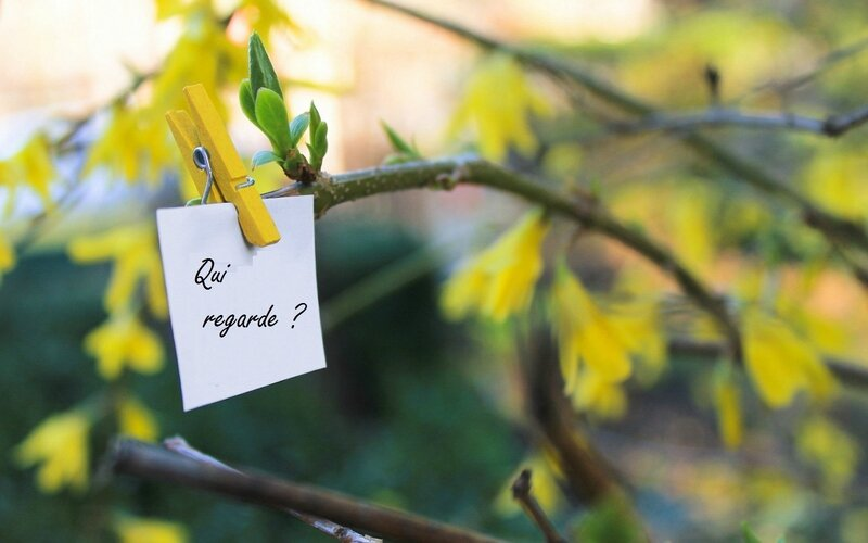 yellow-peg-spring-tree-nature-green-bokeh-photo-hd-wallpaper