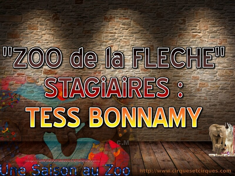 - STAGiAiRES TESS BONNAMY