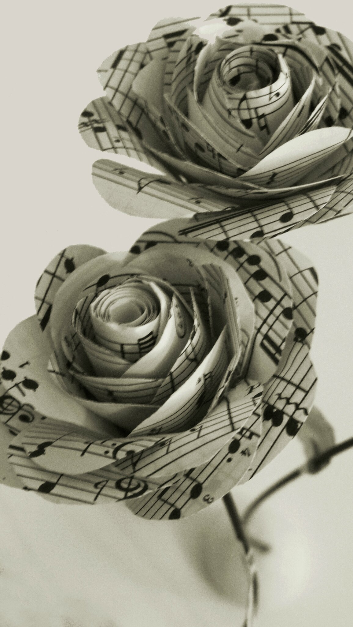 Roses découpées dans une partition de Mozart ©Kalifragili (tous droits réservés)