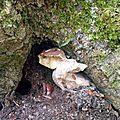 Cèpe d'été au creux d'un chêne...