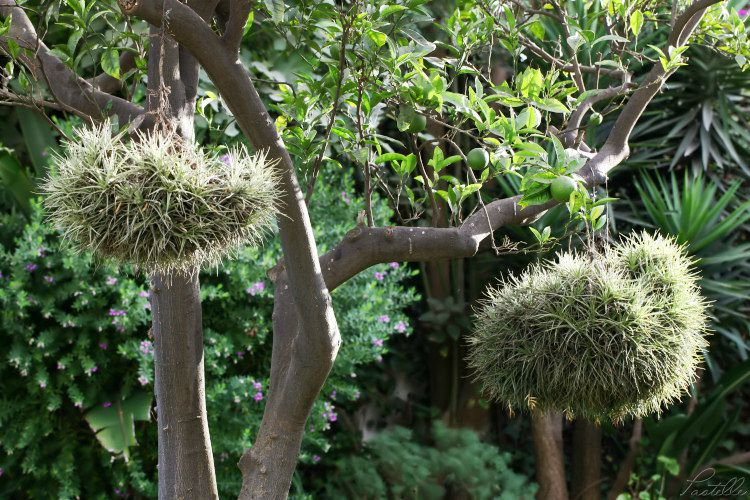 Epiphyte jardin MC_IMG_7062
