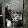 chat-paris-epicerie