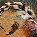 Echange plumes 6sur6