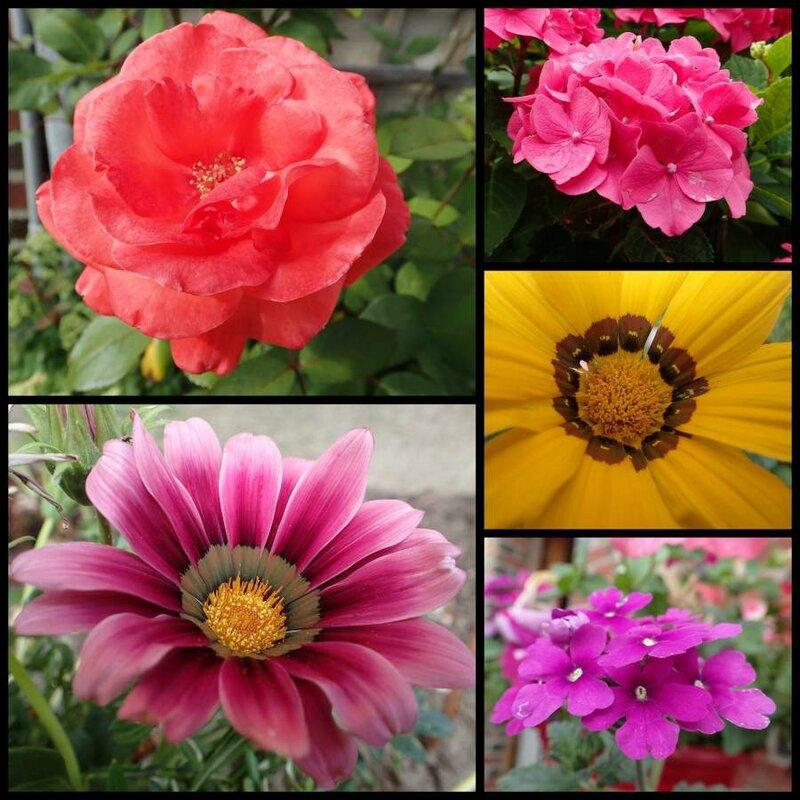 2015_08_jardin_sml