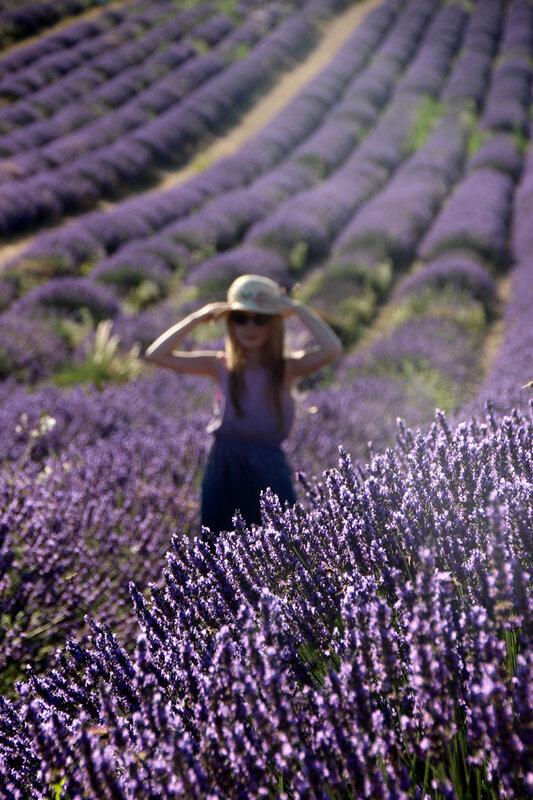 valensole_lavandes_robe_violette