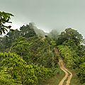 Costa rica, the rain forest