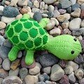 Tortue sheldon