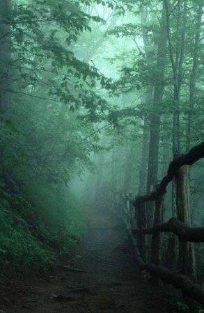 fog_pathway_shimage