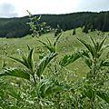 Randonnée accompagnée en boucle - plaine de darbounouse (réserve des hauts plateaux du vercors)