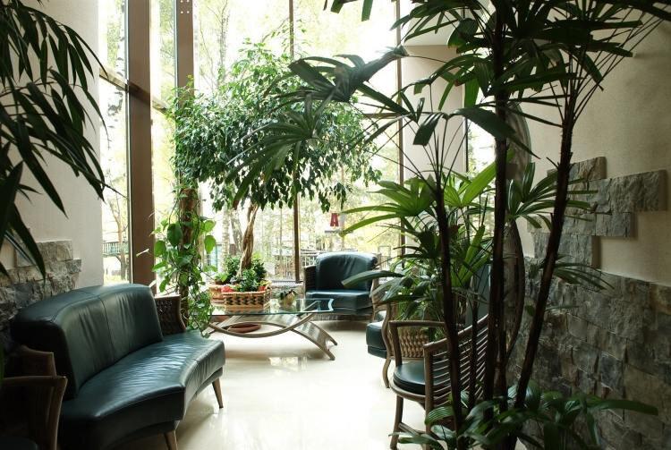 partie-vitrée-maison-jardin-hiver-plantes-vertes