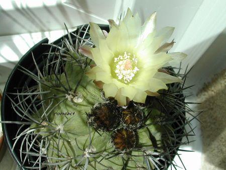 cactus_193