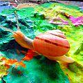 il est beau mon escargot yurtao