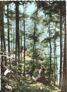 Scan_130625_0075