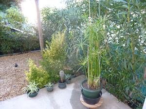 waouuuuh_mes_plantes