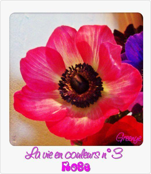 03 rose''